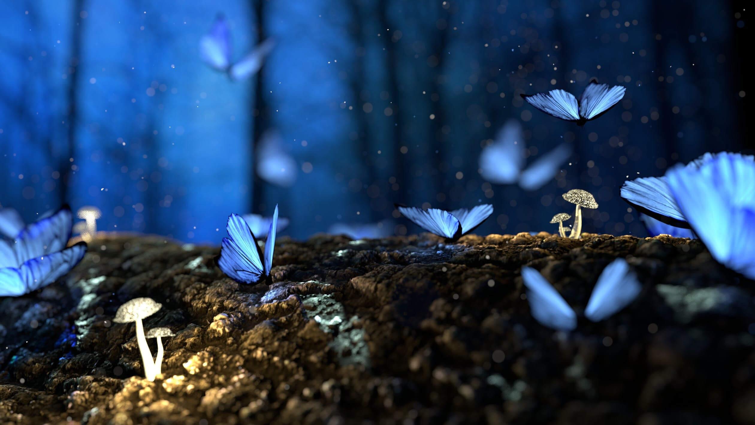 Butterflies - Fullscreen Lightbox
