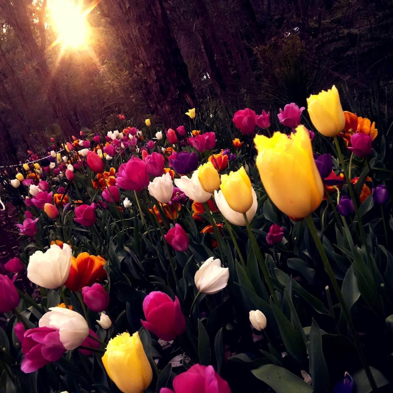 Flowers sunshine - Fullscreen Lightbox